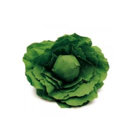 Erzi Lettuce