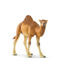 Schleich Animal - Dromadary