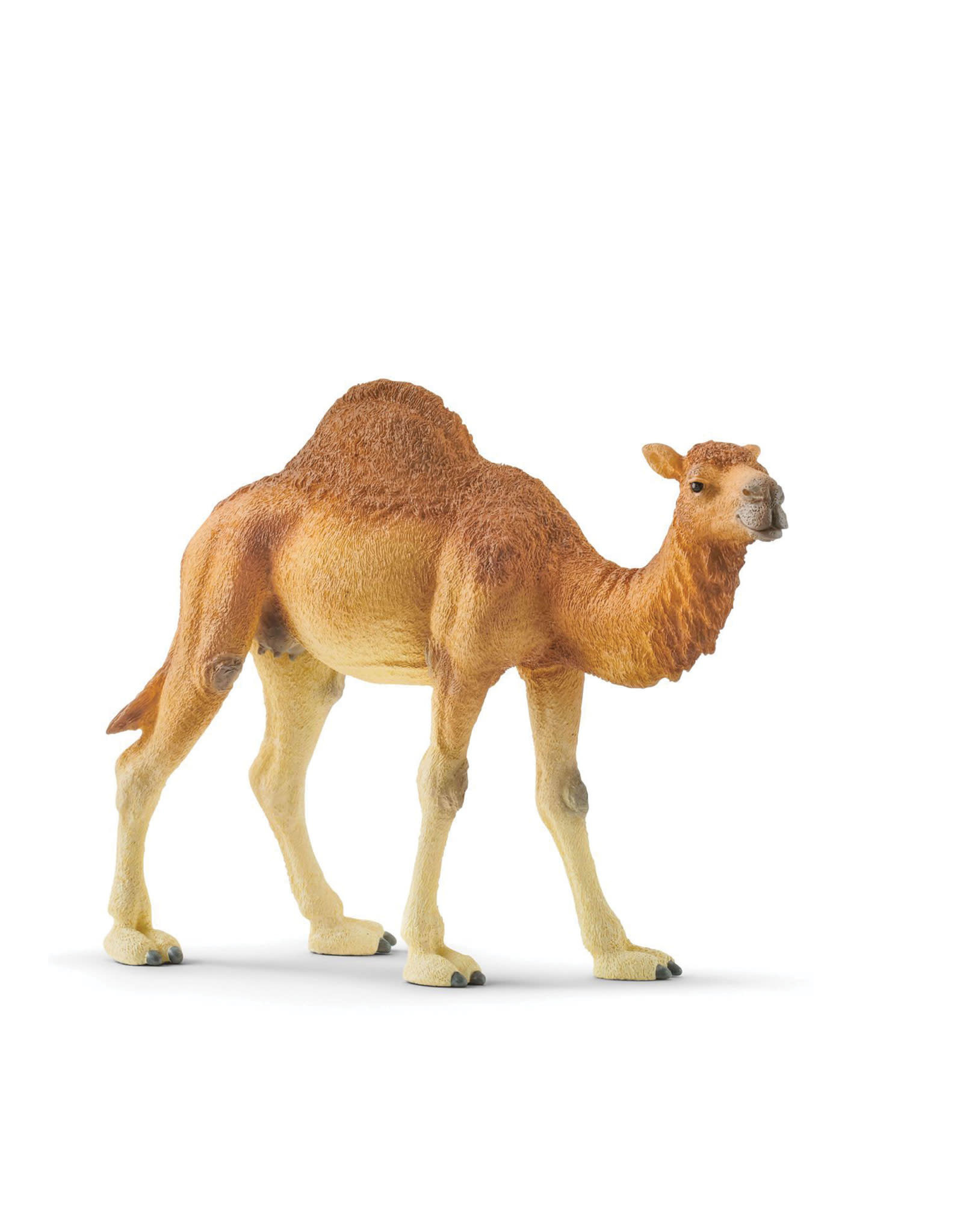 Schleich Animal - Dromadary