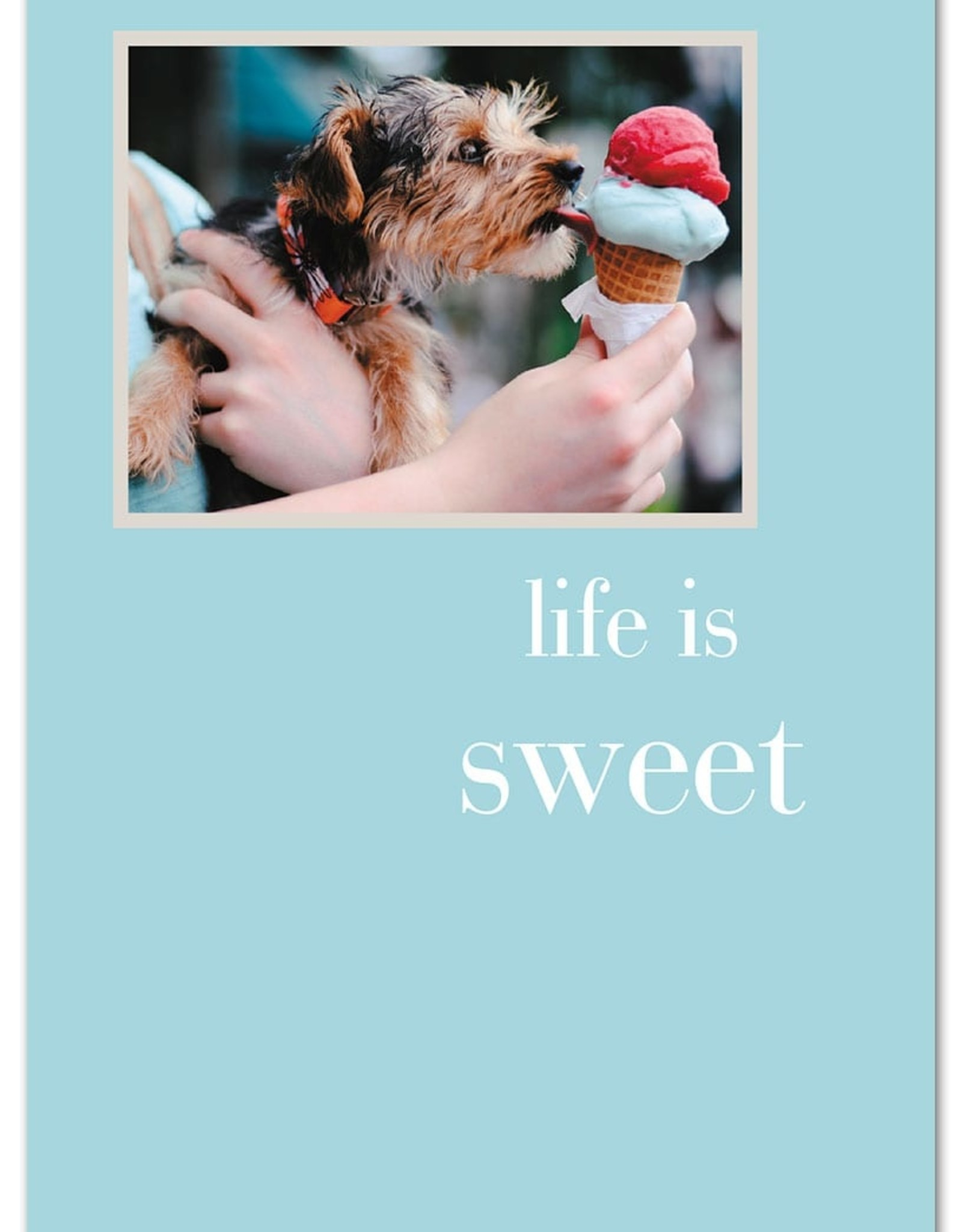 Cardthartic Cardthartic - Life Is Sweet Many Occasions Card
