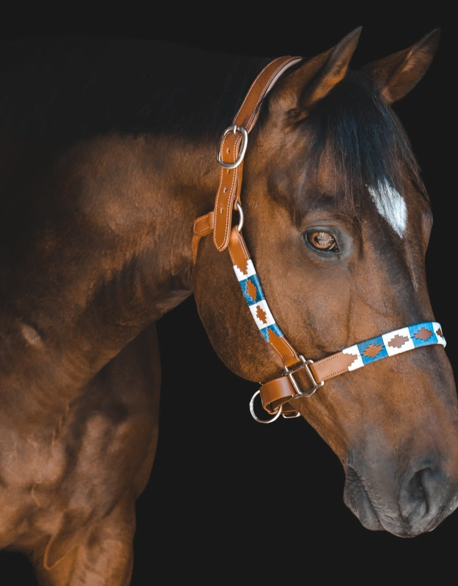 PUP & PONY CO POLO COLLECTION HALTER