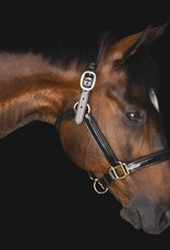 PUP & PONY CO GRAND PRIX COLLECTION HALTER
