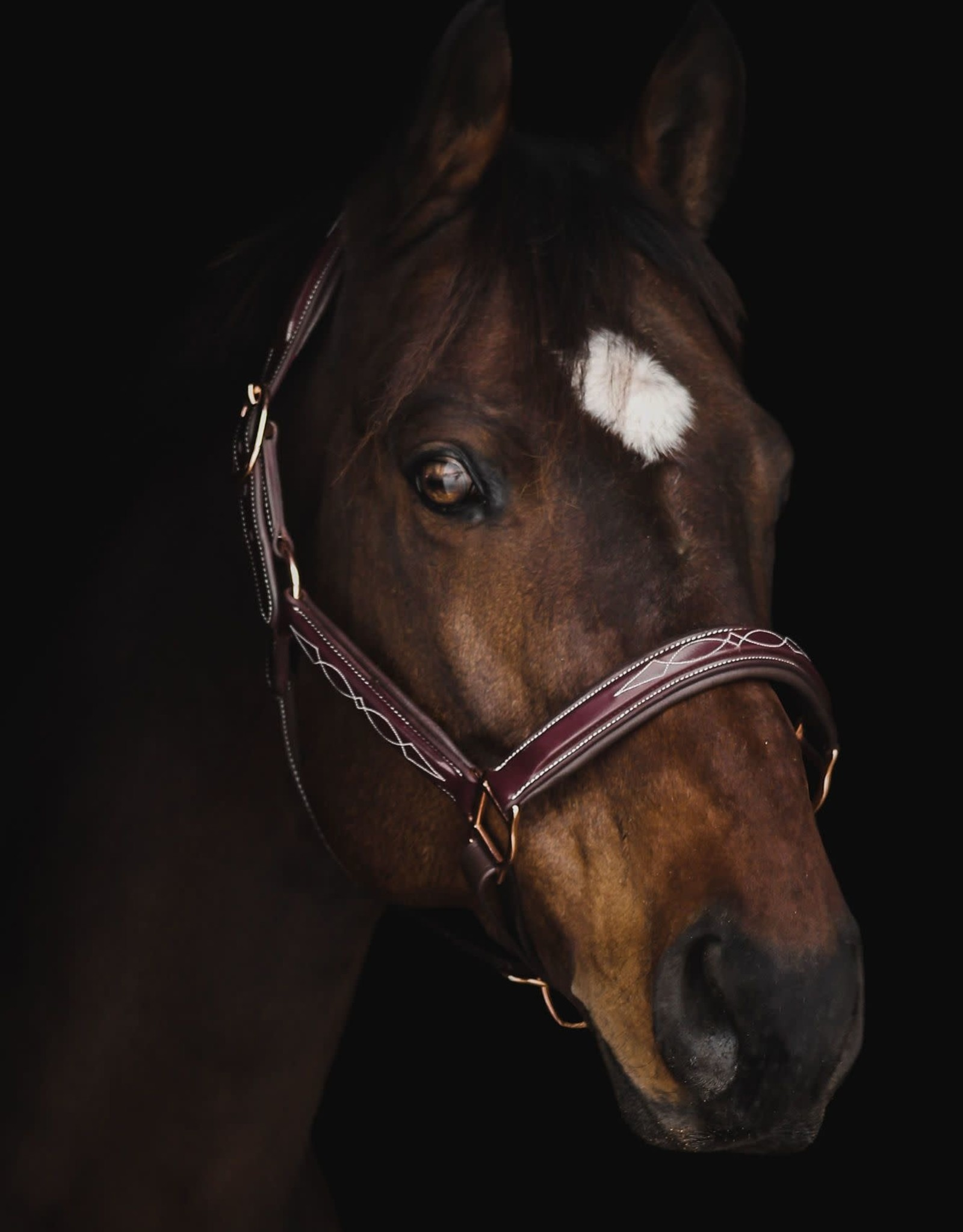 PUP & PONY CO GRAND PRIX SPECIAL COLLECTION HALTER