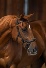 RAMBO MICKLEM MULTI BRIDLE WITH REINS