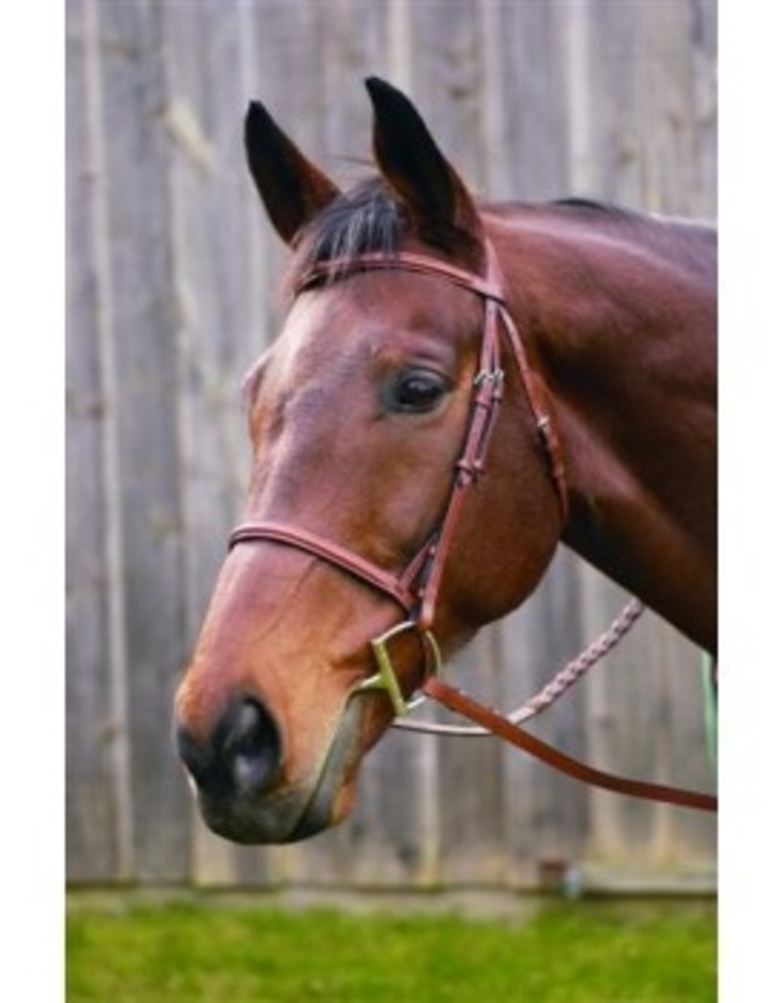 HDR ADV RAISED FANCY STITCHED BRIDLE