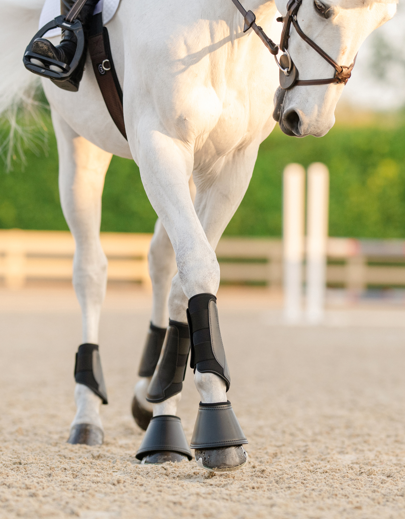 EQUIFIT ESSENTIAL EVERYDAY BOOT - HIND