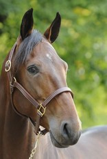 HORZE AMERICAN QUALITY LEATHER HALTER
