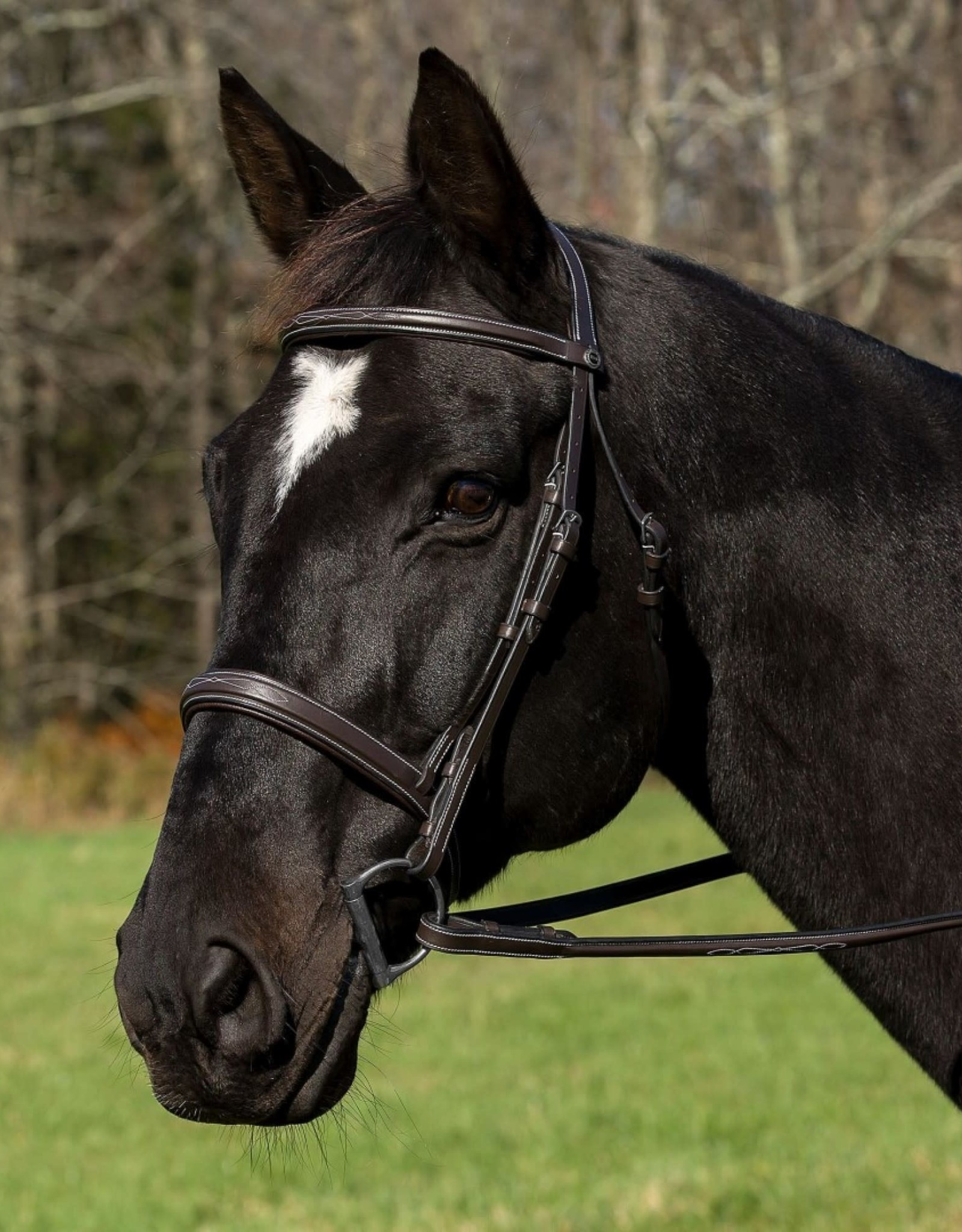 HDR  PRO MONO CROWN SQUARE RAISED BRIDLE WITH REINS