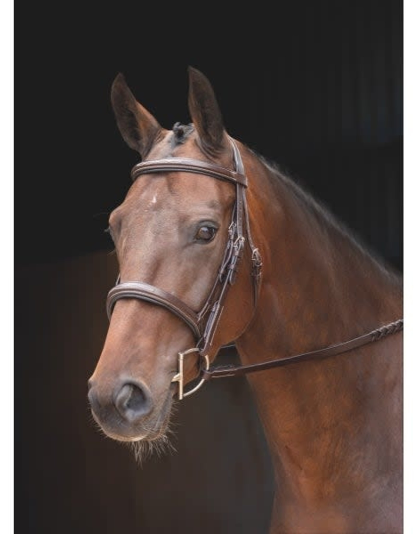 SHIRES ROSSANO FLORENCE BRIDLE