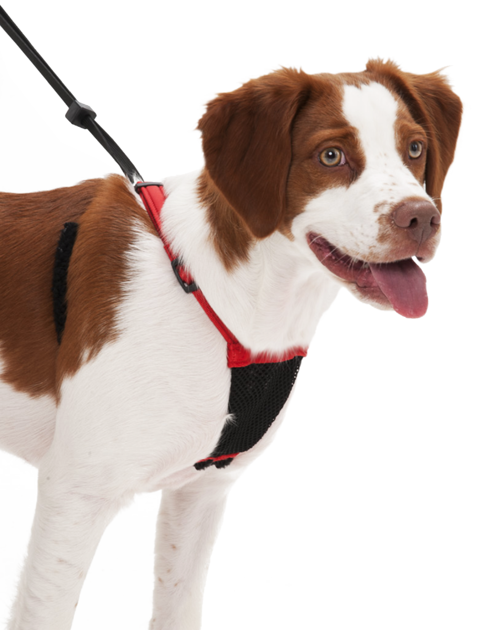 SPORN PET PRODUCTS Sporn | Non-Pull Mesh Harness