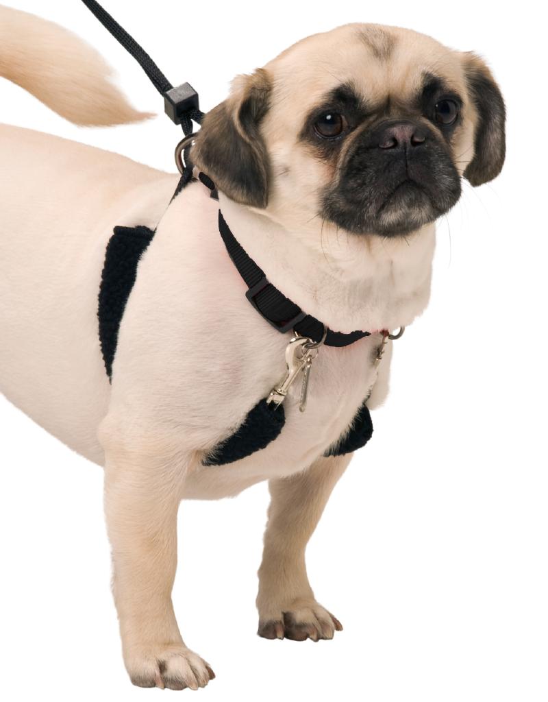 SPORN PET PRODUCTS Sporn | Training Halter