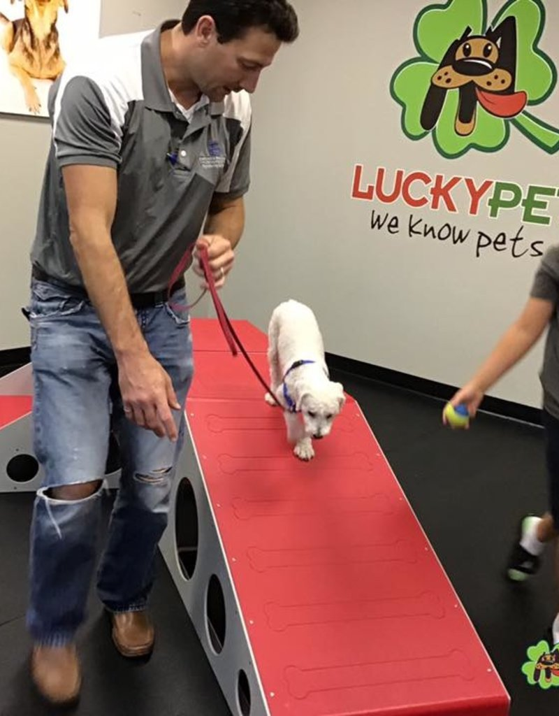 Group Classes | Lucky Puppy (6 classes)