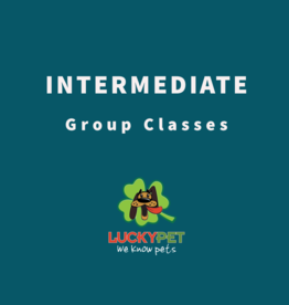 Group Classes | Intermediate Training (6 classes)