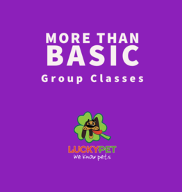 Group Classes | More than Basic (6 classes)