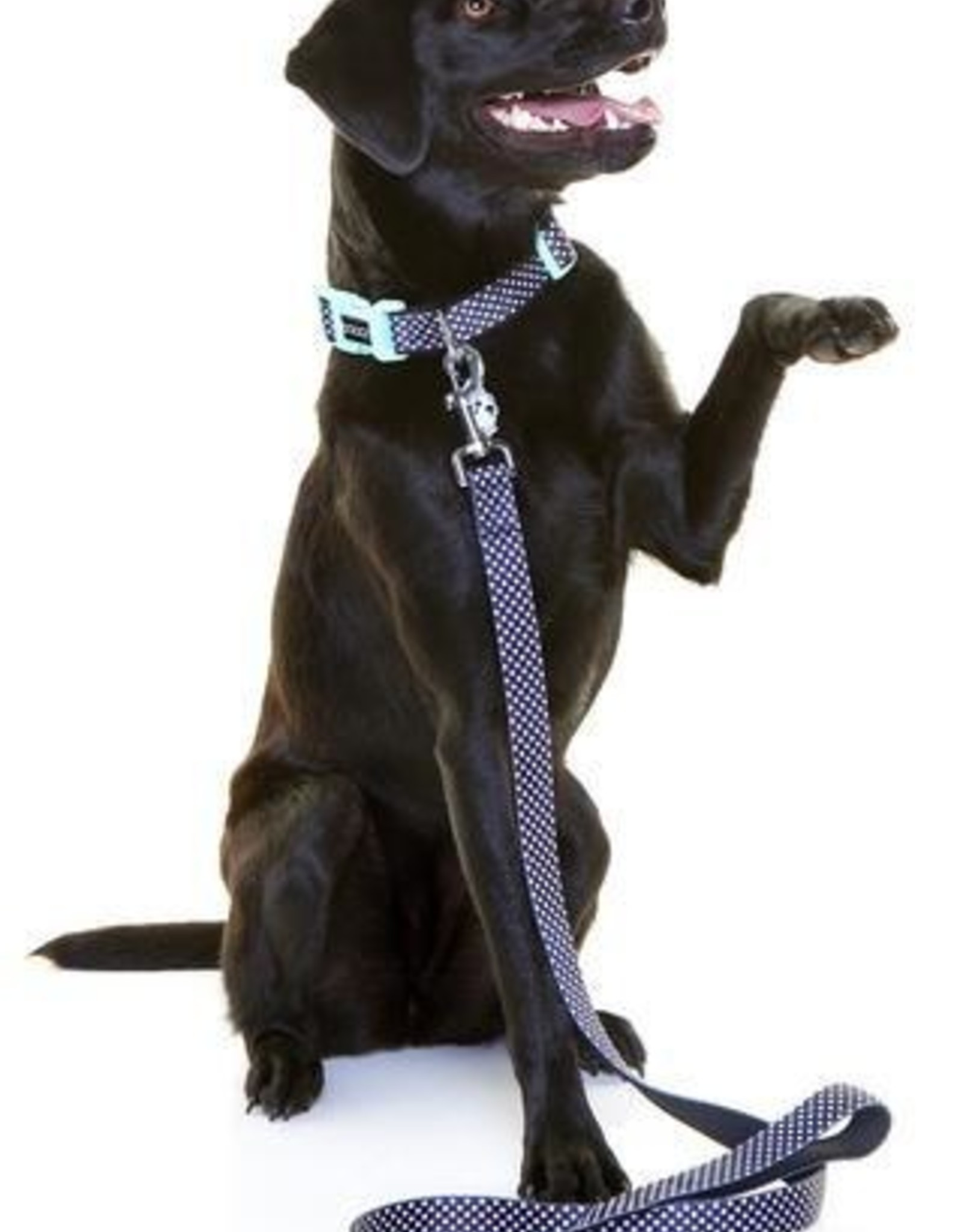 DOOG Doog | Neoprene Dog Lead - Pongo