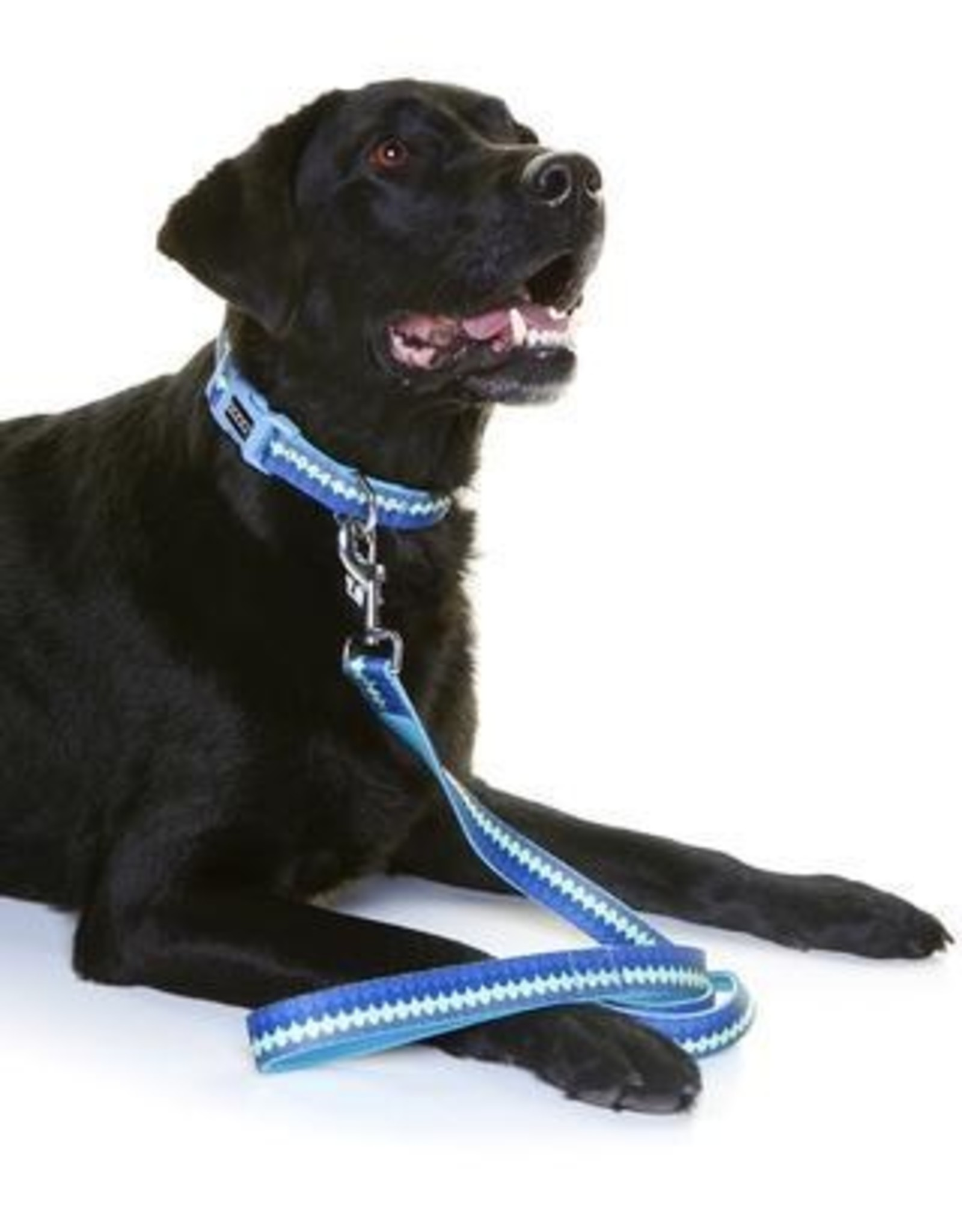 DOOG Doog | Neoprene Dog Lead - Pluto