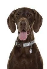 DOOG Doog   Dog Collar - Benji