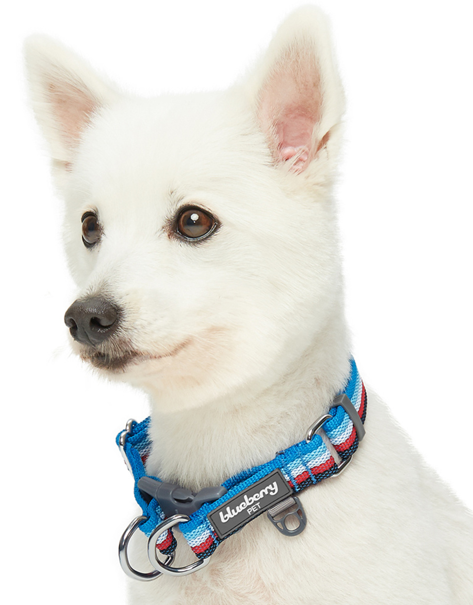 Blueberry Pet Blueberry Pet | Multi-colored Dog Collar