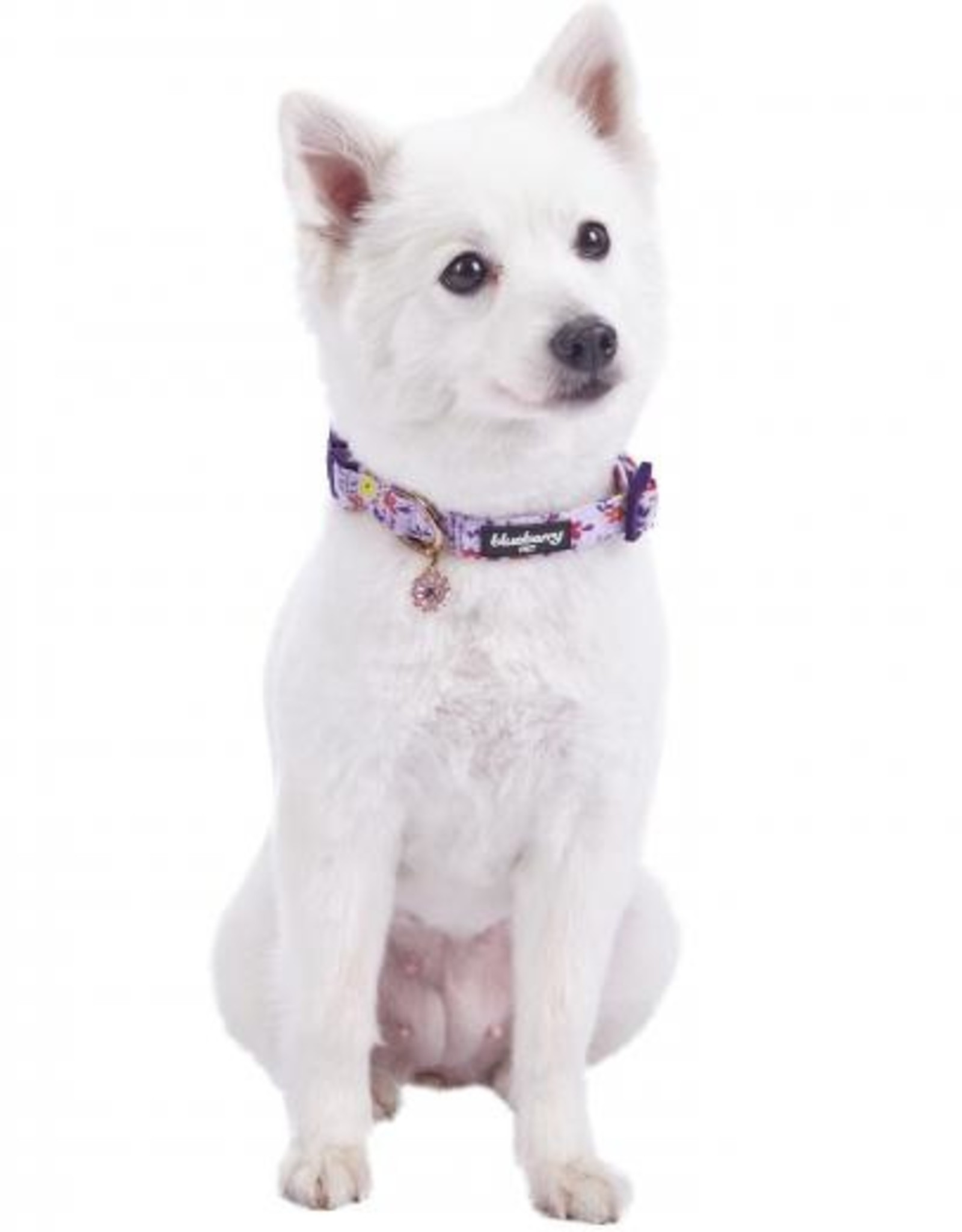 Blueberry Pet Blueberry Pet | Garden Floral Dog Collar
