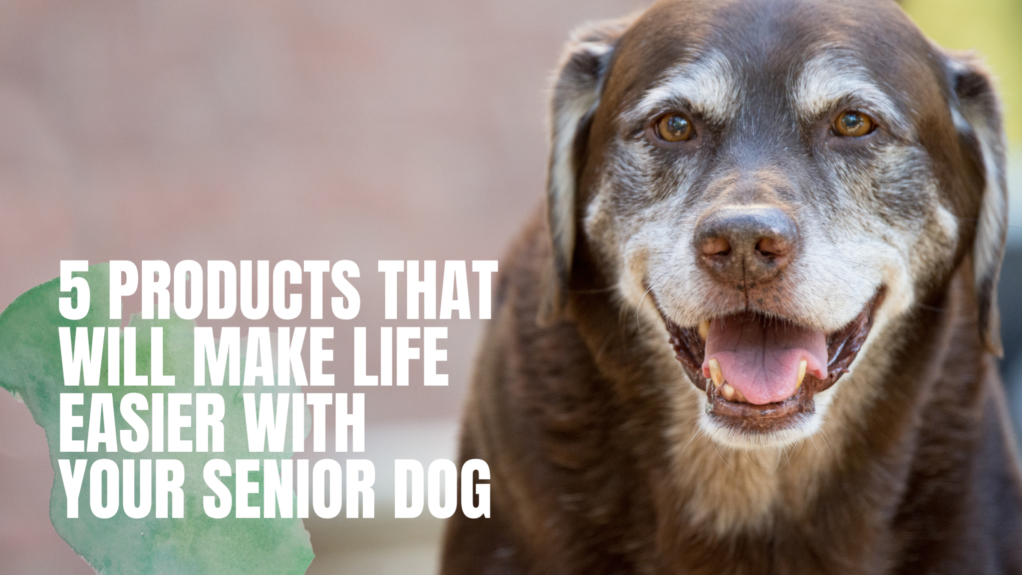 5 products that will make life easier with your senior dog