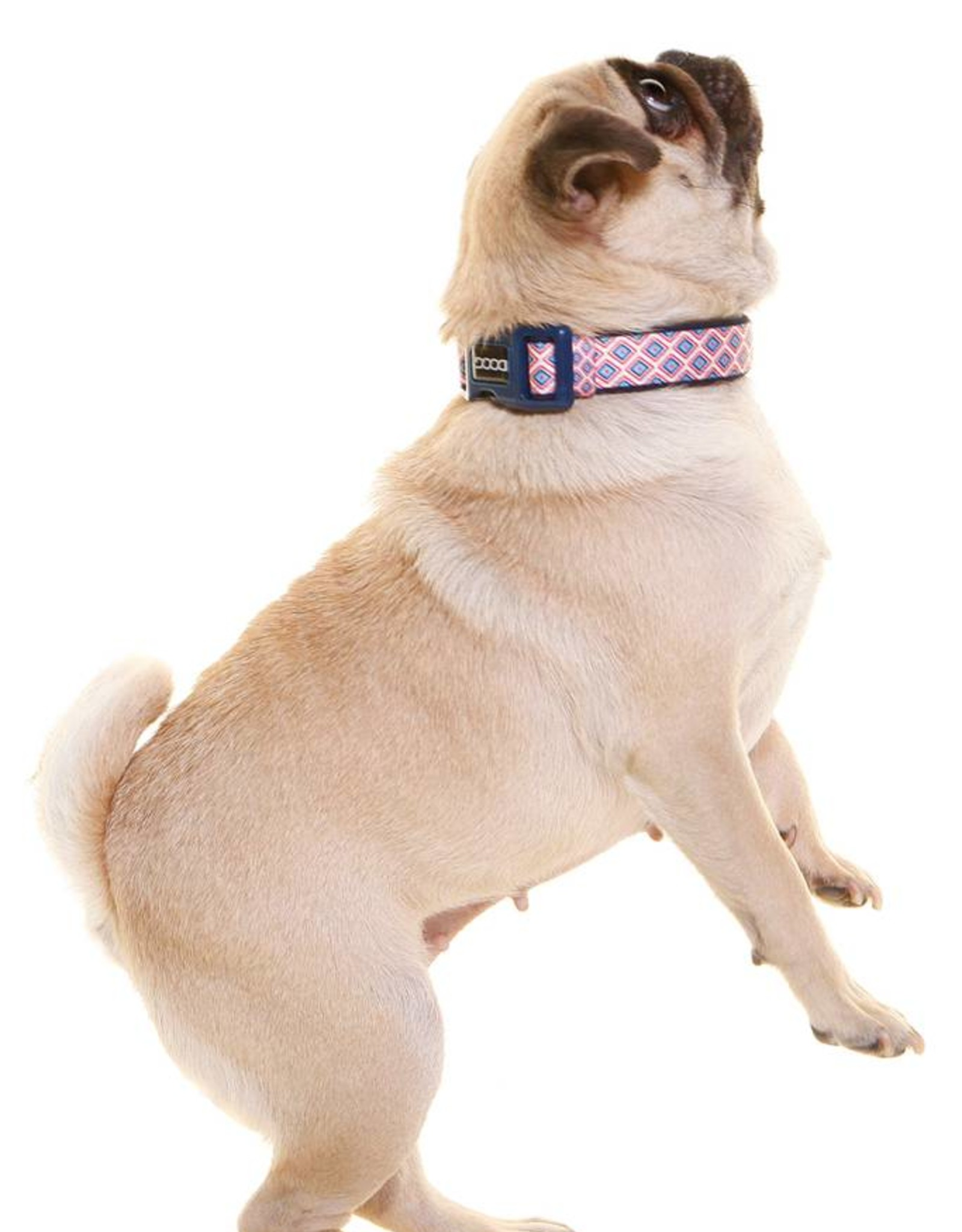DOOG Doog | Dog Collar - Gromit