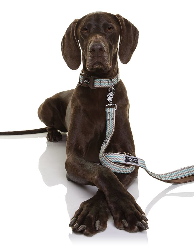 DOOG Doog | Dog Leash - Benji