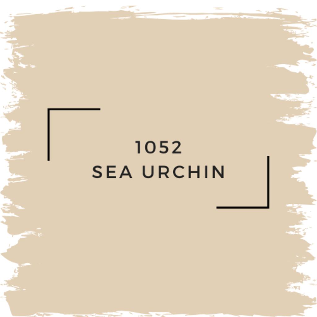 Benjamin Moore 1052 Sea Urchin