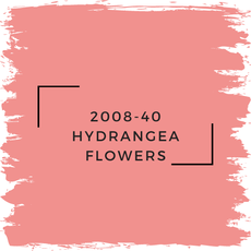 Benjamin Moore 2008-40 Hydrangea Flowers