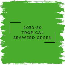 Benjamin Moore 2030-20 Tropical Seaweed Green