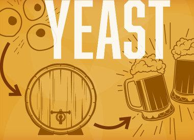 BEER YEAST