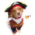 Pet Krewe Pet Krewe Pirate (3 Sizes)