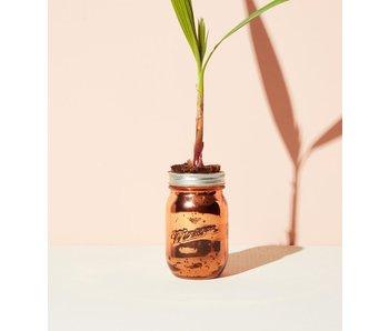 Palm Tree Garden Jar Pint