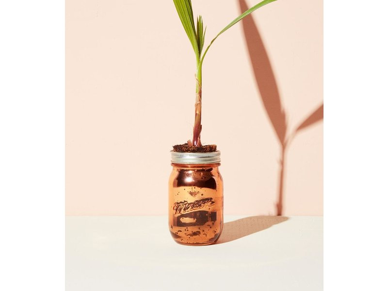 Modern Sprout Palm Tree Garden Jar Pint