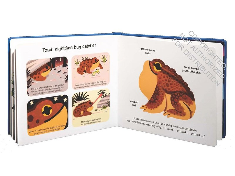 Chronicle Books Touch and Explore Animals at Night