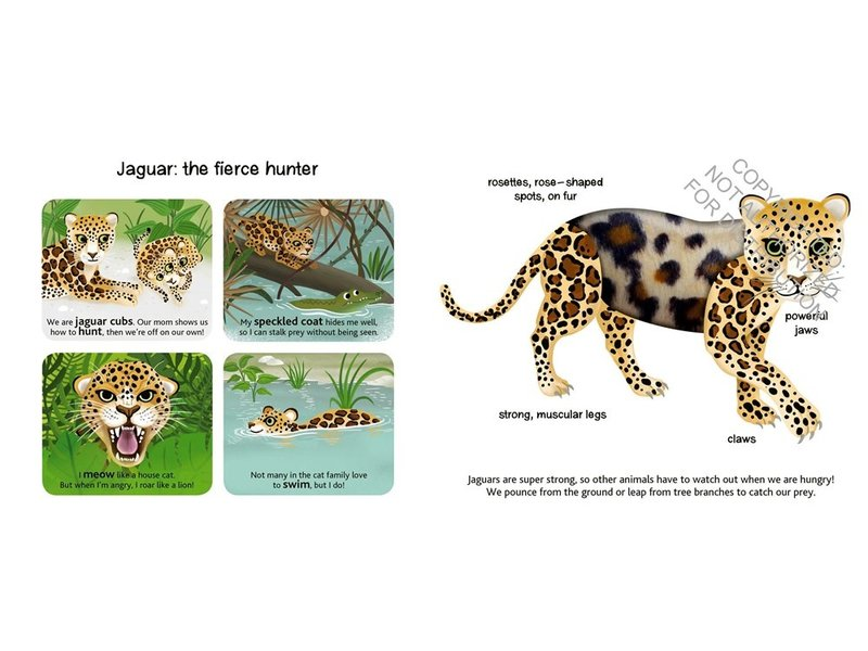Chronicle Books Touch and Explore: Jungle Animals