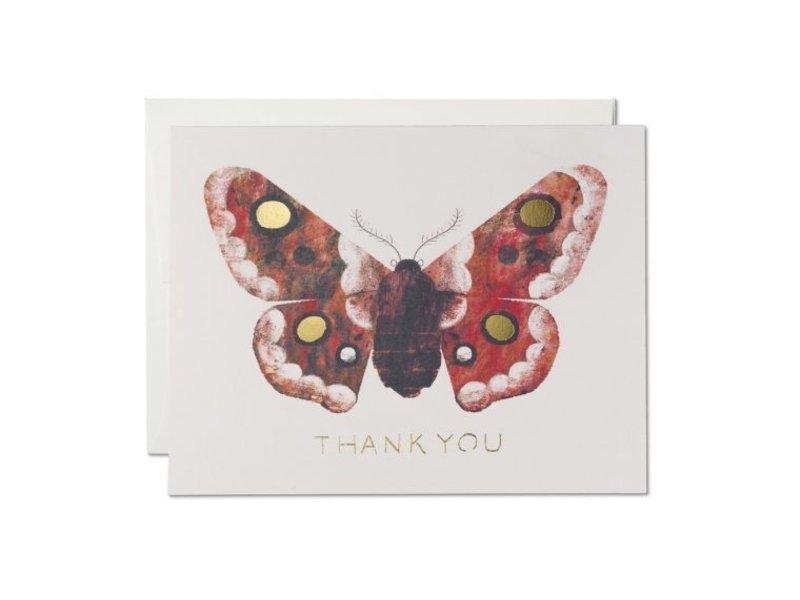 Red Cap Cards Moth