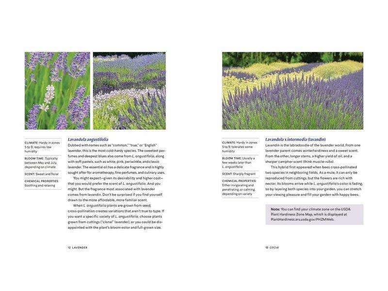 Random House Lavender