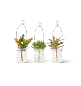 K&K Interiors Mini Succulents in Hanging Glass
