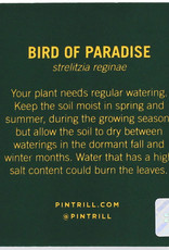 Pintrill Flower Series - Birds of Paradise