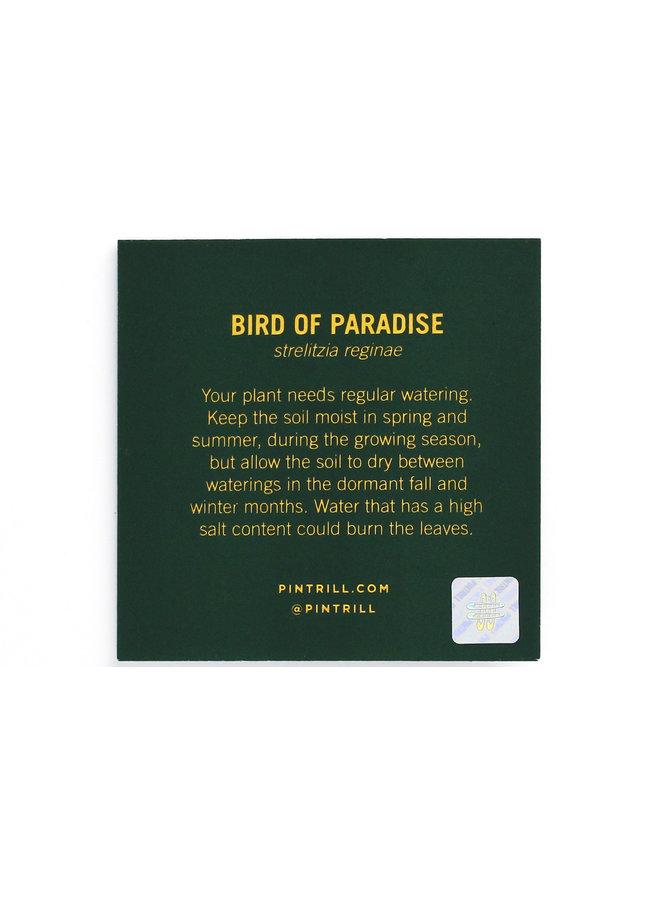 Flower Series - Birds of Paradise
