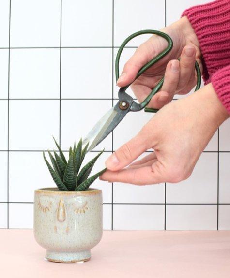 Indaba  Friendly face planter