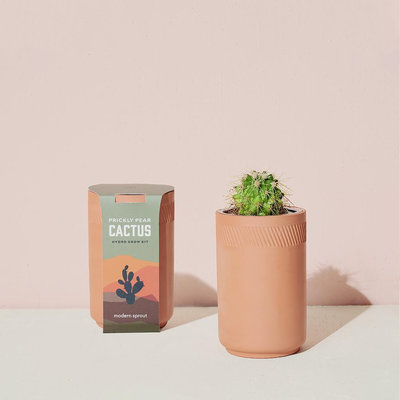 Modern sprout Kit Terracotta - Cactus