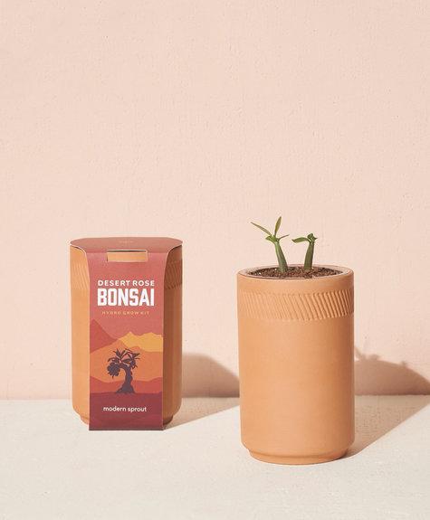 Modern sprout Kit Terracotta - Rose du désert