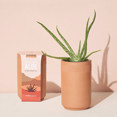 Modern sprout Kit Terracotta - Aloe
