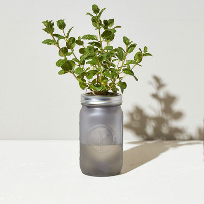 Modern sprout Kit Pot Mason - Menthe
