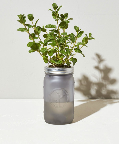 Modern sprout Kit Pot Mason - Menthe