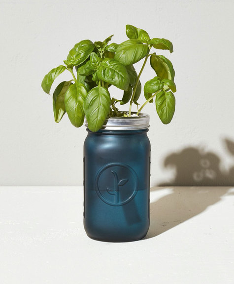 Modern sprout Mason Jar - Basilic