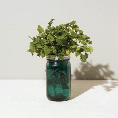 Modern sprout Kit Pot Mason - Coriandre