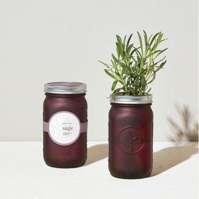 Modern sprout Mason Jar - Sage