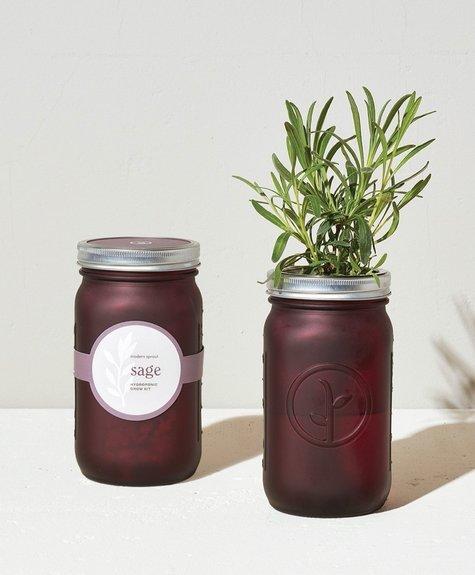 Modern sprout Kit Pot Mason - Sauge
